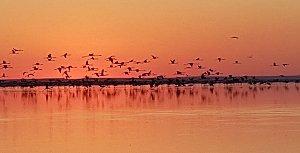 Tuz Gölünden Fotograflar