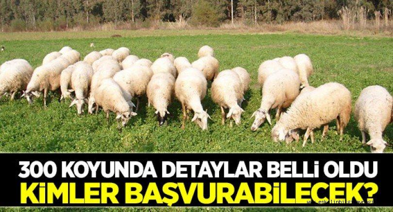 300 koyun projesinin detayları belli oldu