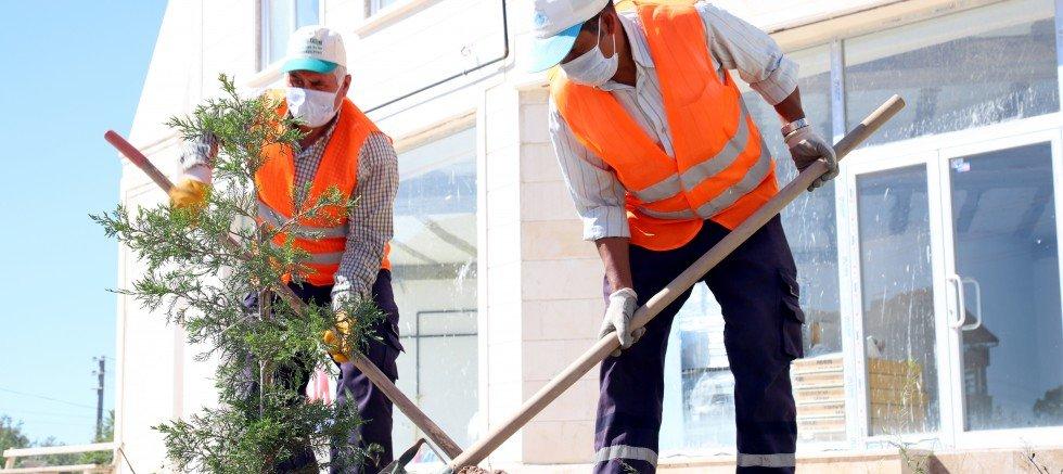 Aksaray Belediye Başkanı Dinçer 44 Bin Ağacı , 300 Bin Çalı Fidesini ve 400 Bin Süs Bitkisini Toprakla Buluşturduk Dedi