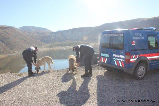 Aksaray'da Soğukta Aç Kalan Hayvanları Jandarma Elleriyle Besledi