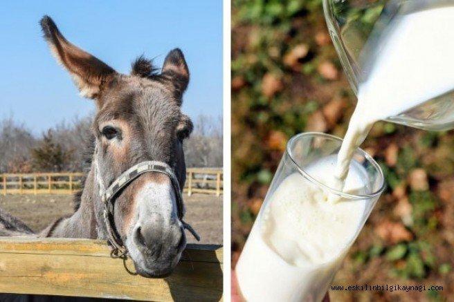 Eşek Sütü Faydaları nelerdir?. Kansere vb bir çok hastalığa iyi geliyor.